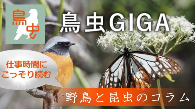 鳥虫GIGA